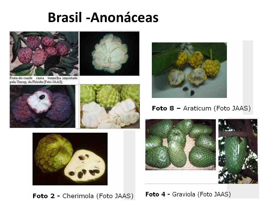 Brasil -Anonáceas