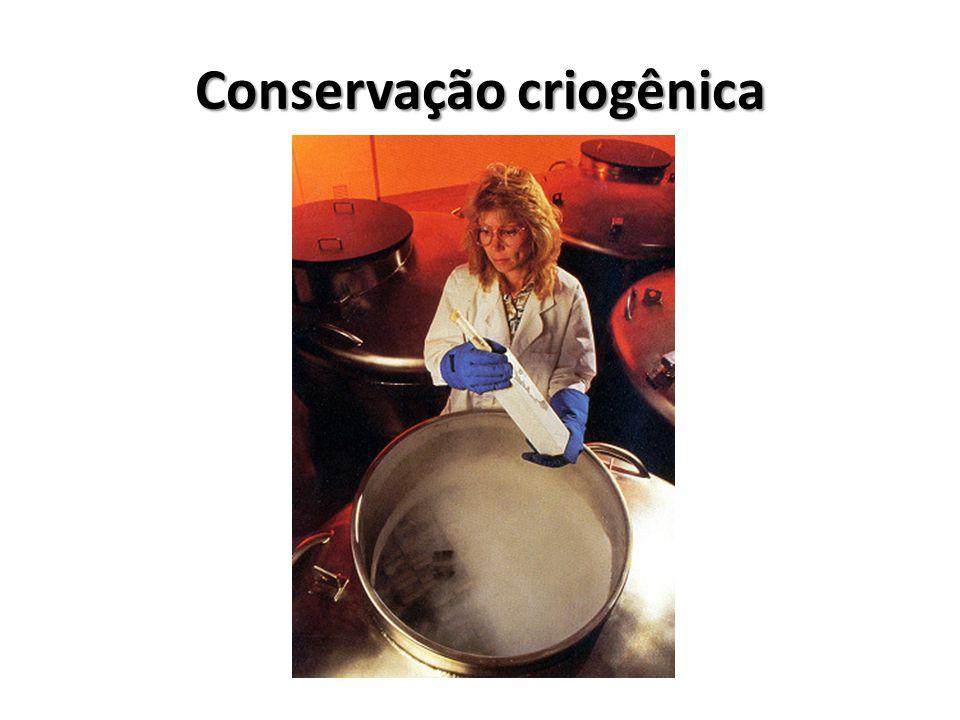 Conservação criogênica