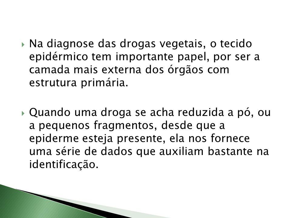 Na diagnose das drogas vegetais, o tecido epidérmico tem importante papel, por ser a camada mais externa dos órgãos com estrutura primária.