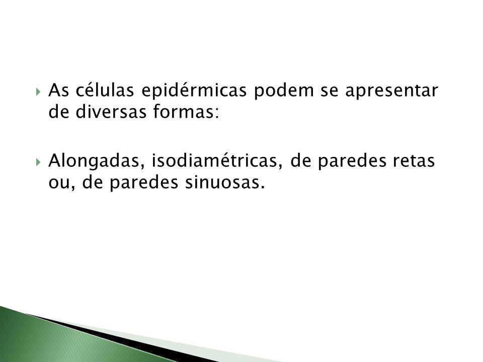 As células epidérmicas podem se apresentar de diversas formas: