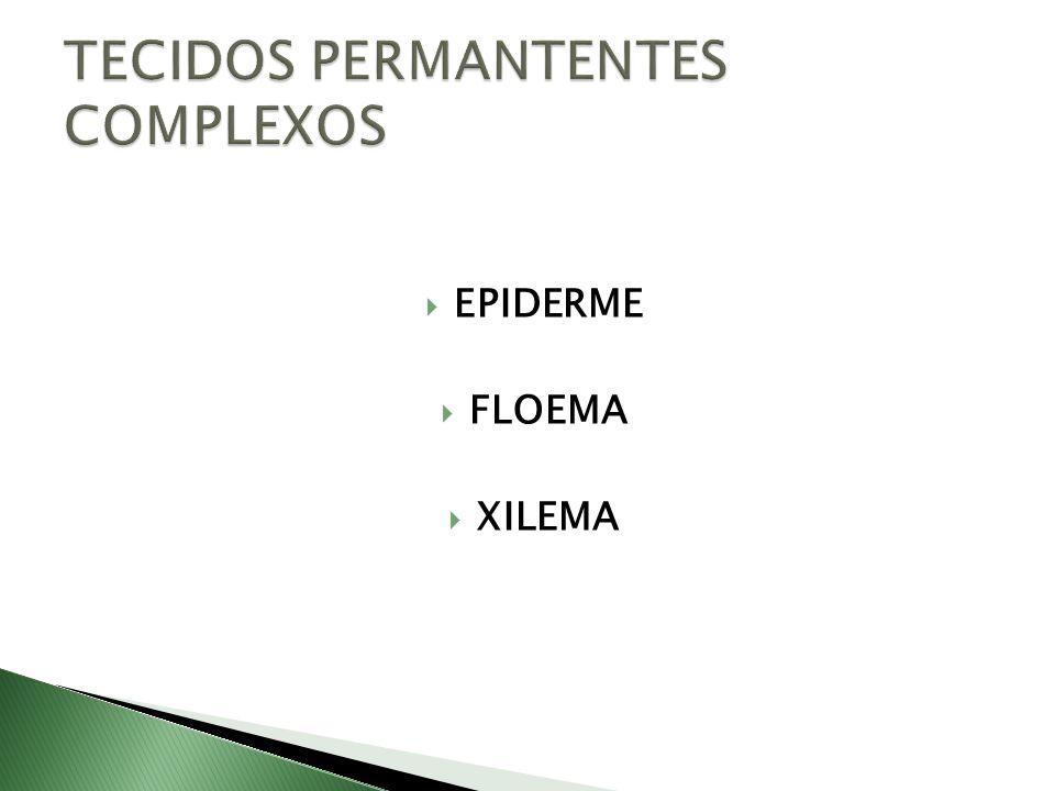 TECIDOS PERMANTENTES COMPLEXOS