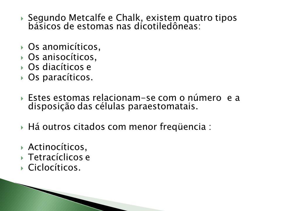 Segundo Metcalfe e Chalk, existem quatro tipos básicos de estomas nas dicotiledôneas:
