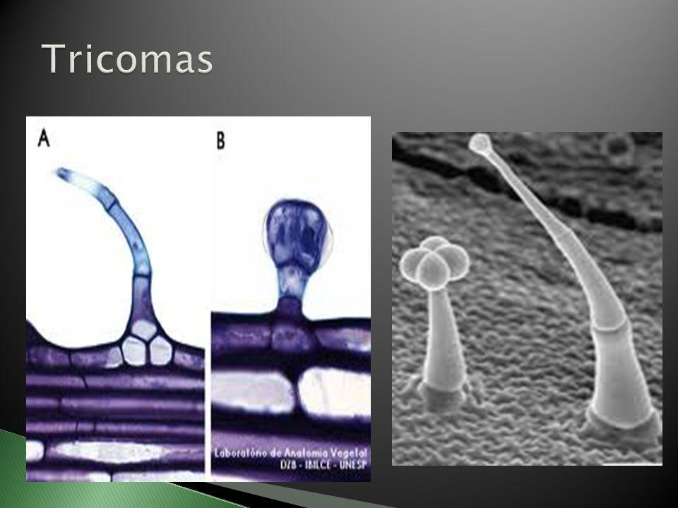 Tricomas