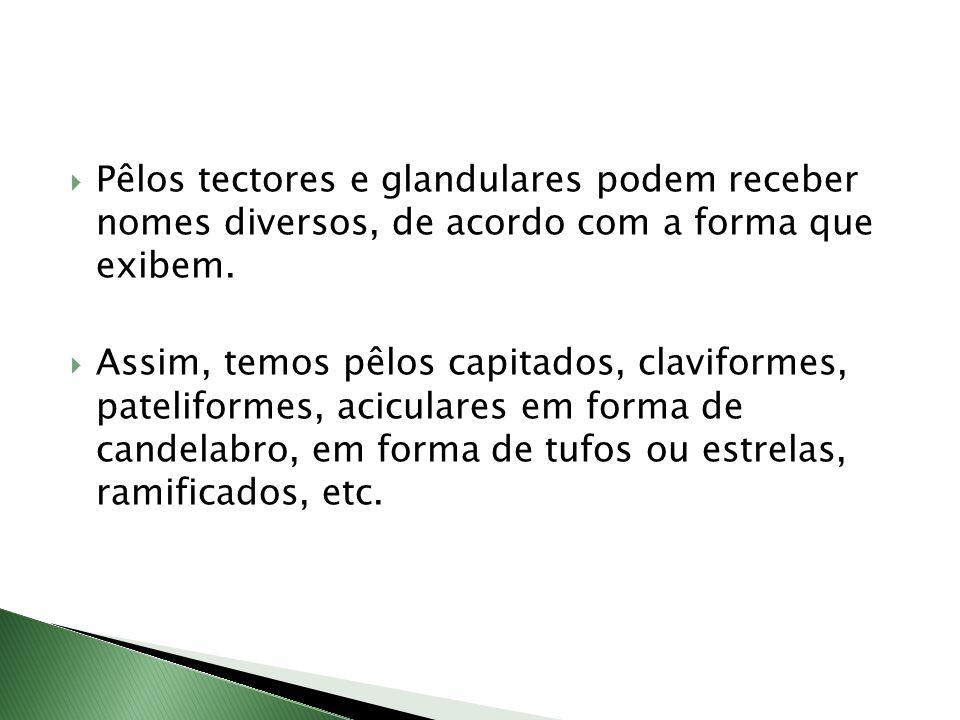Pêlos tectores e glandulares podem receber nomes diversos, de acordo com a forma que exibem.