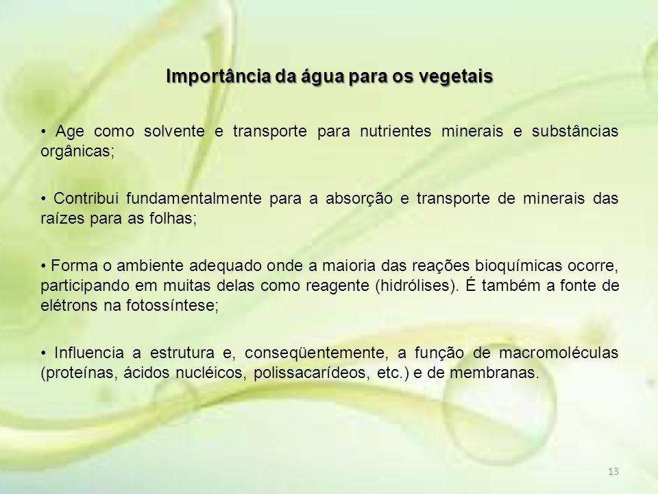 Importância da água para os vegetais