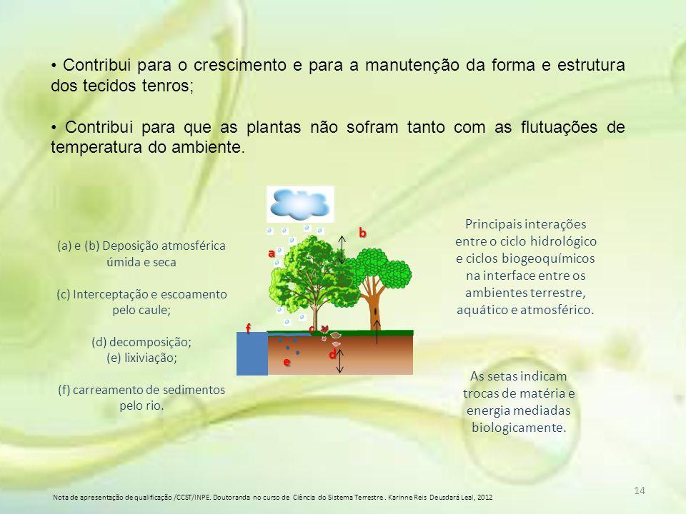• Contribui para o crescimento e para a manutenção da forma e estrutura dos tecidos tenros;
