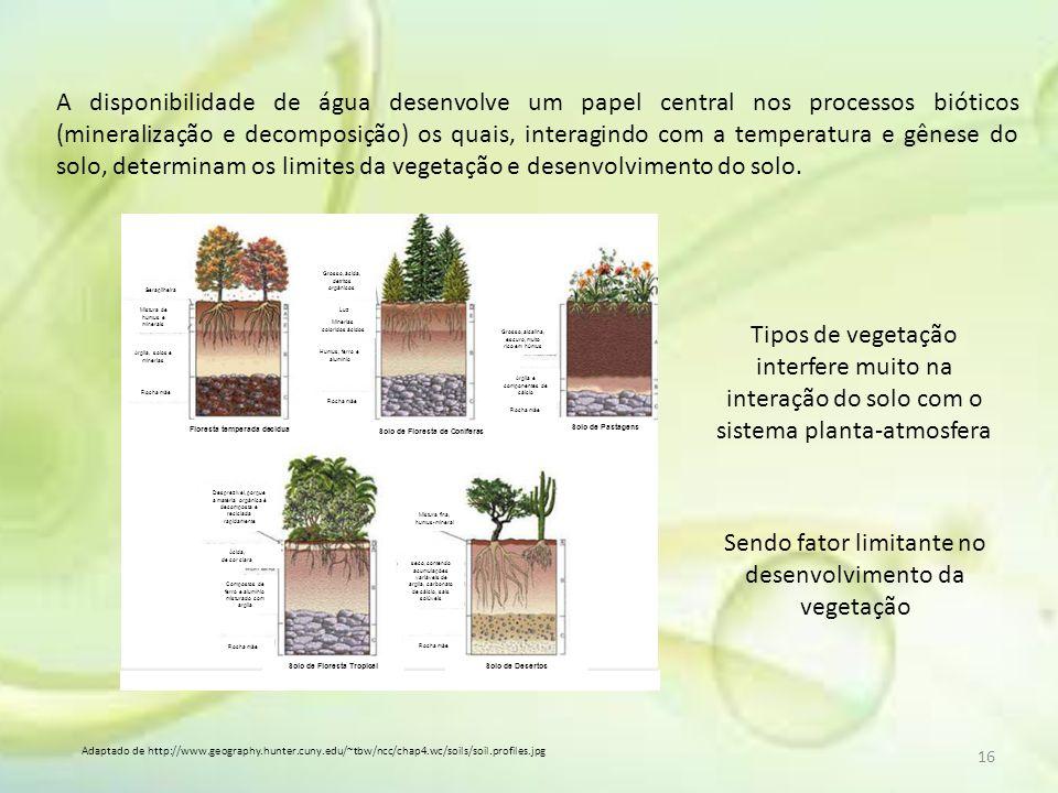 Sendo fator limitante no desenvolvimento da vegetação