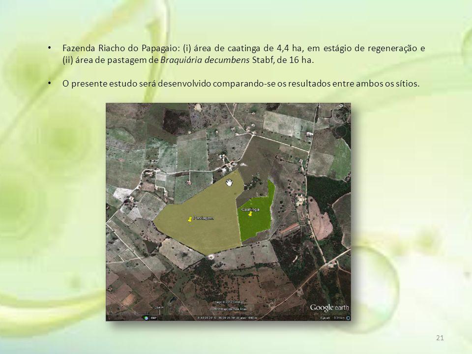 Fazenda Riacho do Papagaio: (i) área de caatinga de 4,4 ha, em estágio de regeneração e (ii) área de pastagem de Braquiária decumbens Stabf, de 16 ha.