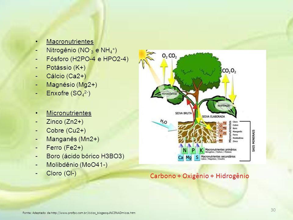 Carbono + Oxigênio + Hidrogênio