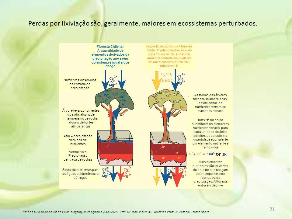 Impacto do ácido na Floresta