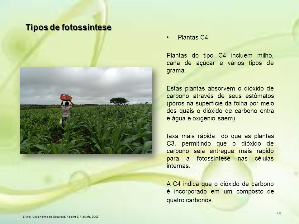 Tipos de fotossíntese Plantas C4