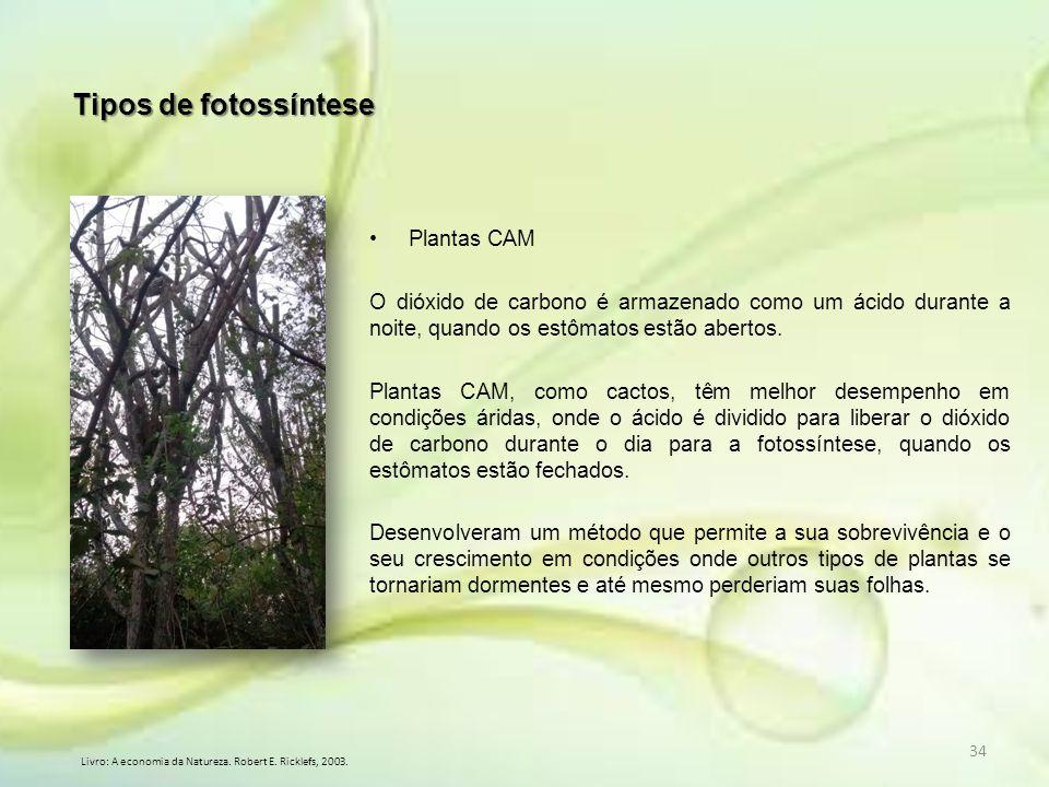 Tipos de fotossíntese Plantas CAM