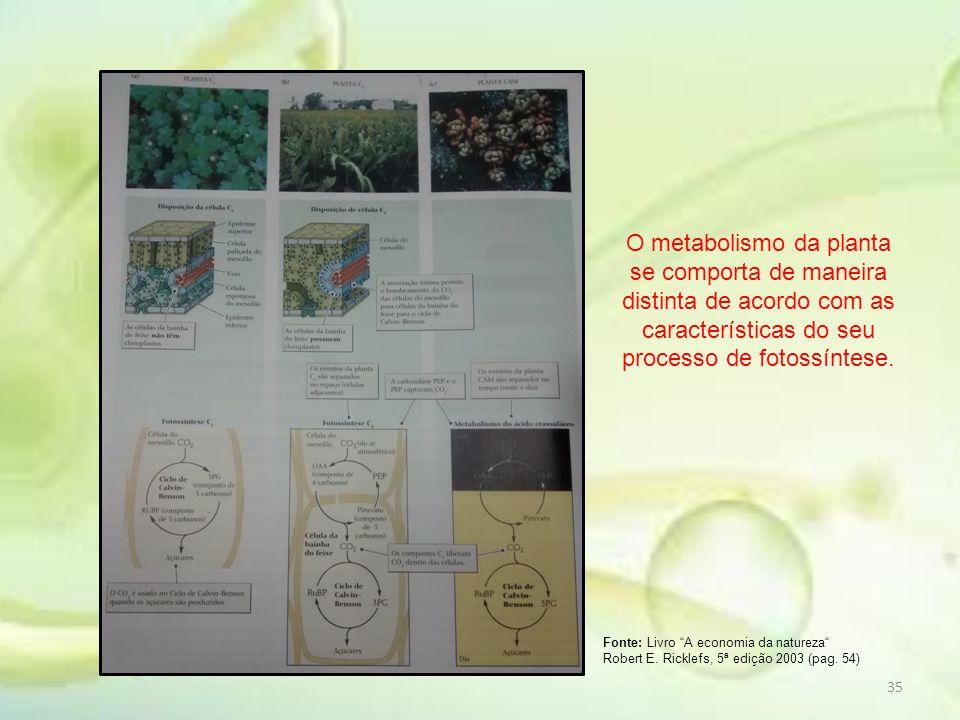 O metabolismo da planta se comporta de maneira distinta de acordo com as características do seu processo de fotossíntese.