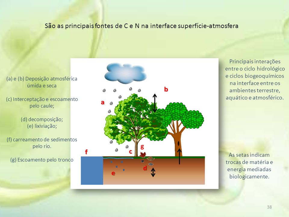 São as principais fontes de C e N na interface superfície-atmosfera