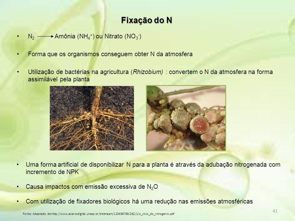Fixação do N N2 Amônia (NH4+) ou Nitrato (NO3-)