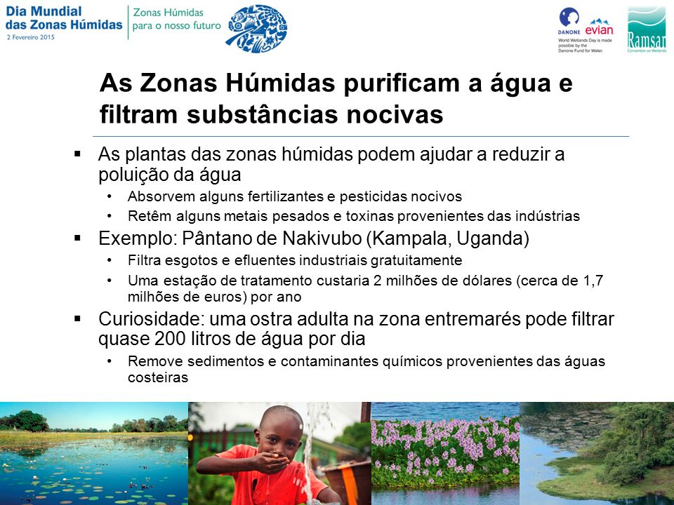As Zonas Húmidas purificam a água e filtram substâncias nocivas