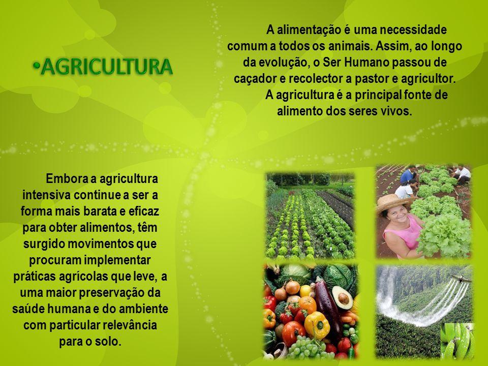 A agricultura é a principal fonte de alimento dos seres vivos.