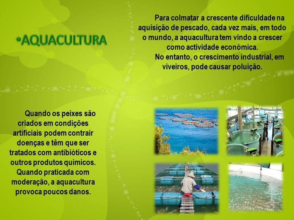 Para colmatar a crescente dificuldade na aquisição de pescado, cada vez mais, em todo o mundo, a aquacultura tem vindo a crescer como actividade económica.
