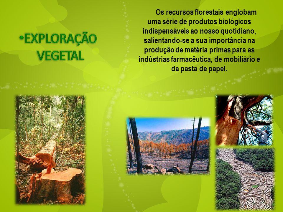 Os recursos florestais englobam uma série de produtos biológicos indispensáveis ao nosso quotidiano, salientando-se a sua importância na produção de matéria primas para as indústrias farmacêutica, de mobiliário e da pasta de papel.