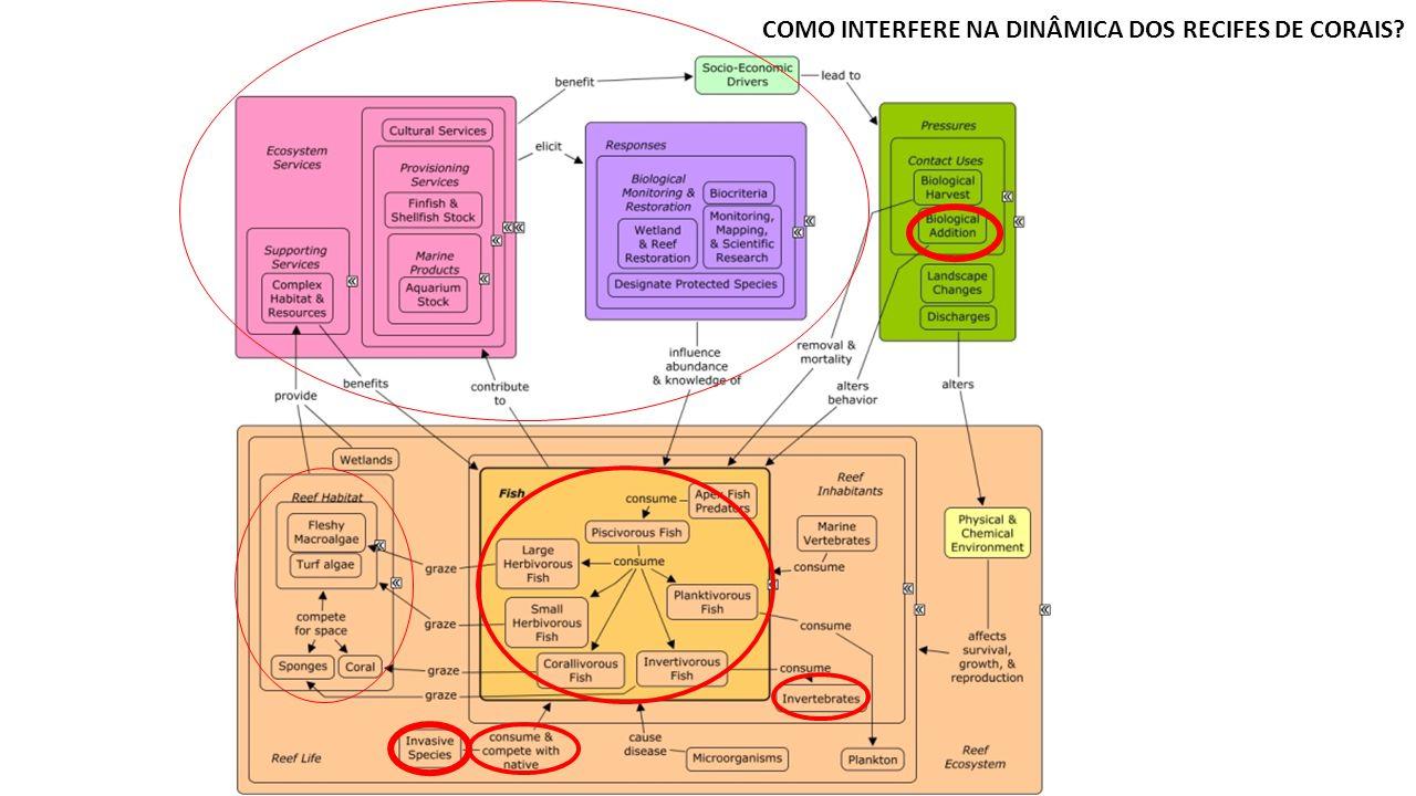 COMO INTERFERE NA DINÂMICA DOS RECIFES DE CORAIS
