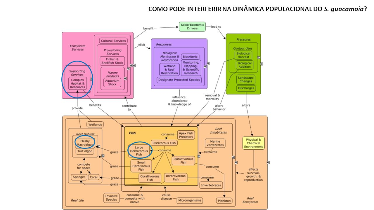 COMO PODE INTERFERIR NA DINÂMICA POPULACIONAL DO S. guacamaia
