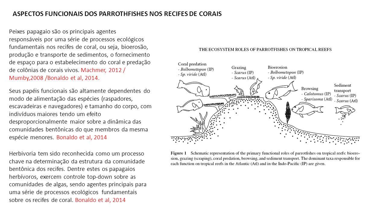 ASPECTOS FUNCIONAIS DOS PARROTHFISHES NOS RECIFES DE CORAIS