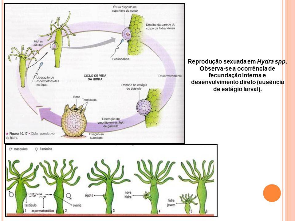 Reprodução sexuada em Hydra spp