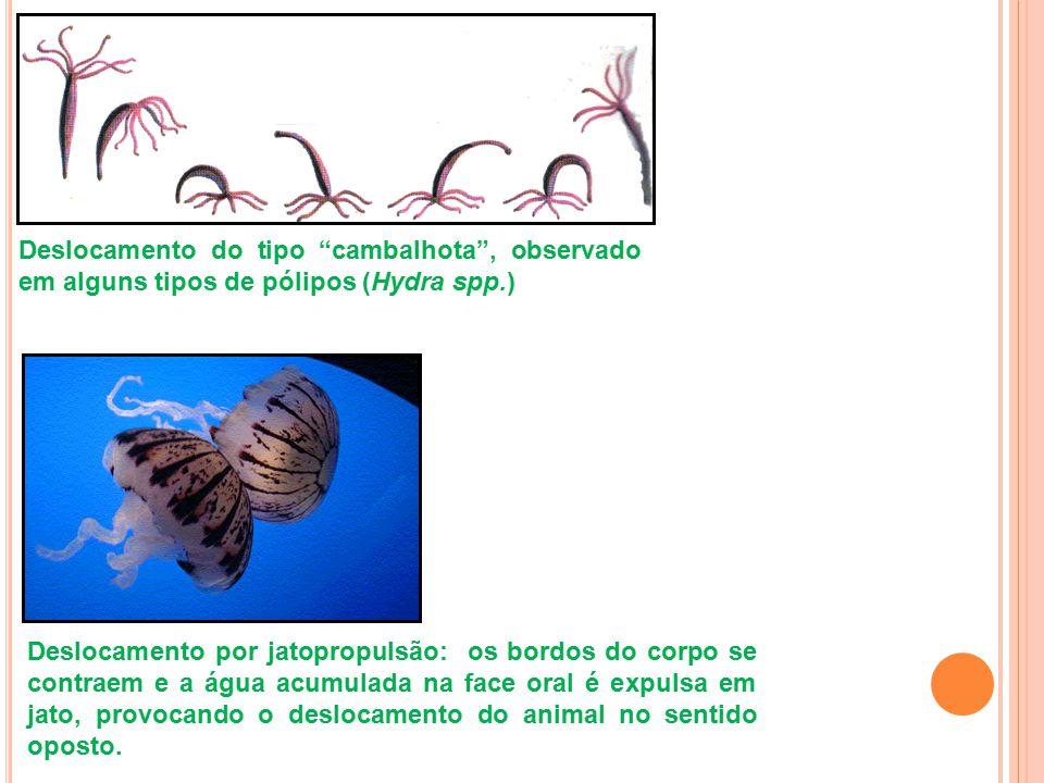 Deslocamento do tipo cambalhota , observado em alguns tipos de pólipos (Hydra spp.)