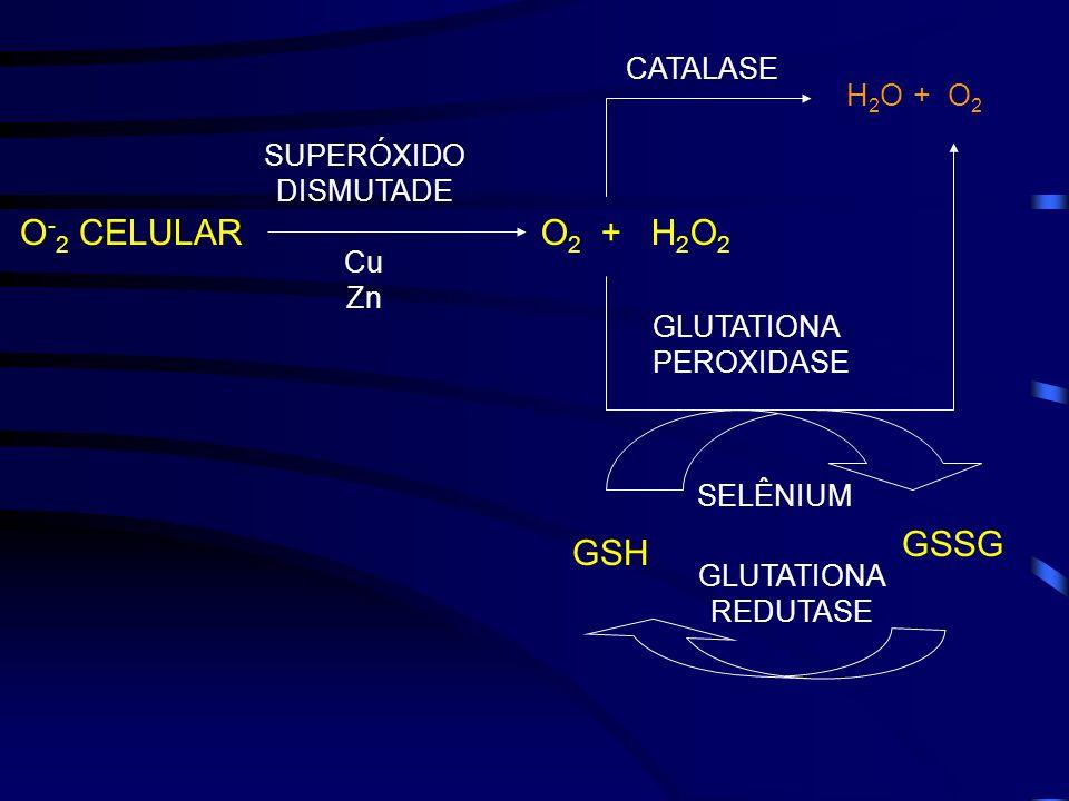 O-2 CELULAR O2 + H2O2 GSSG GSH CATALASE H2O + O2 SUPERÓXIDO DISMUTADE