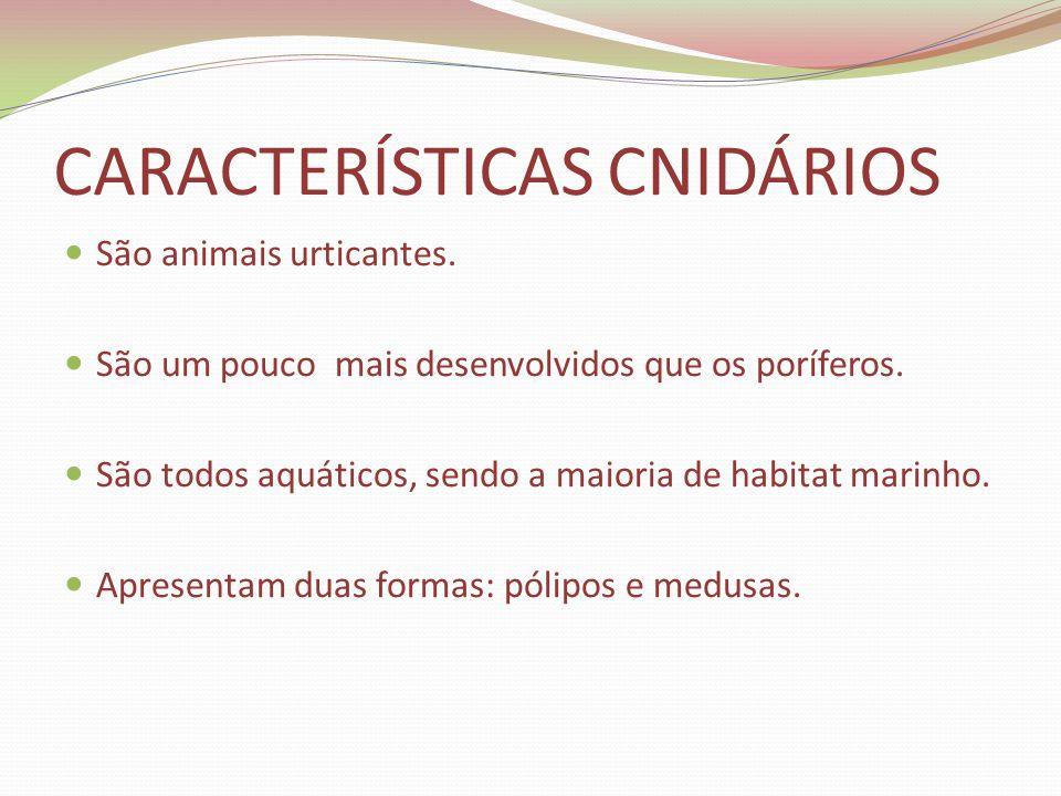 CARACTERÍSTICAS CNIDÁRIOS