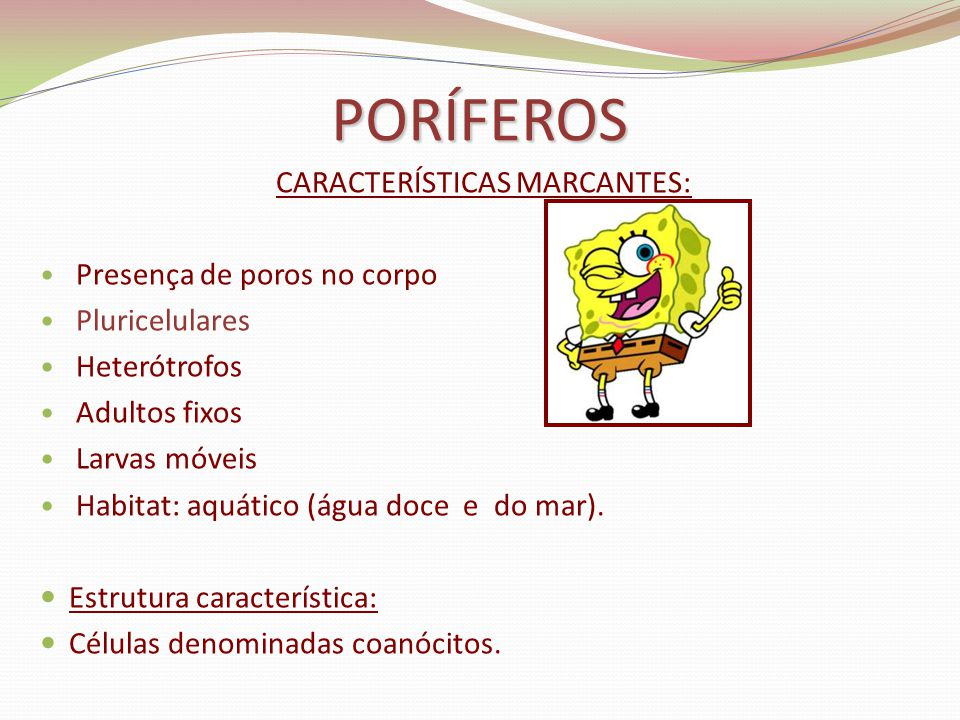 CARACTERÍSTICAS MARCANTES: