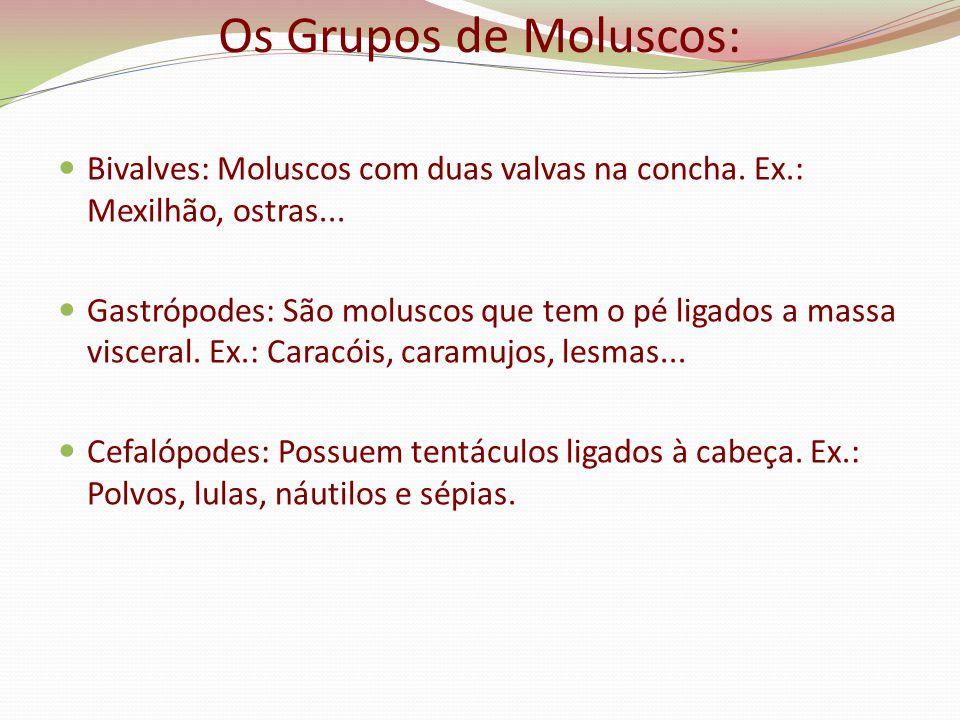 Os Grupos de Moluscos: Bivalves: Moluscos com duas valvas na concha. Ex.: Mexilhão, ostras...
