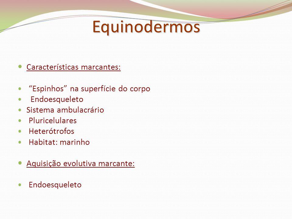 Equinodermos Características marcantes: