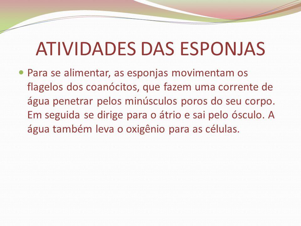 ATIVIDADES DAS ESPONJAS