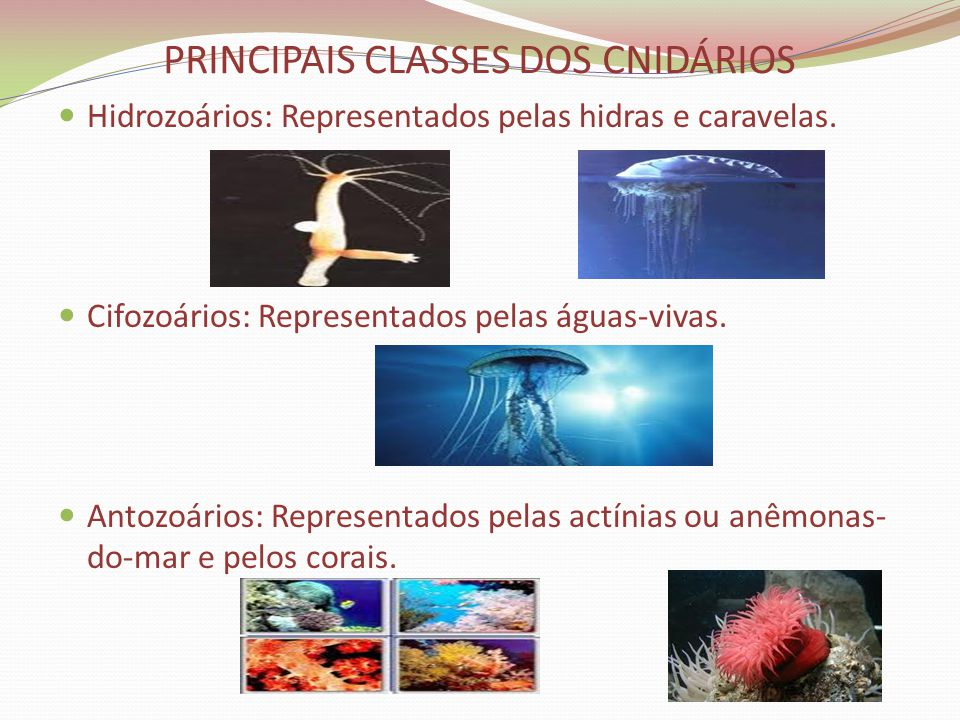 PRINCIPAIS CLASSES DOS CNIDÁRIOS