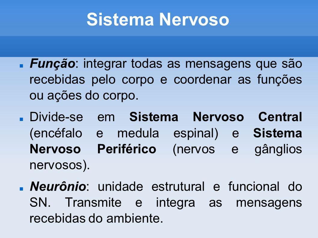 Sistema Nervoso Função: integrar todas as mensagens que são recebidas pelo corpo e coordenar as funções ou ações do corpo.