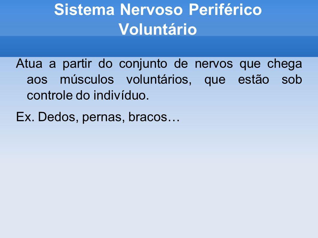 Sistema Nervoso Periférico Voluntário