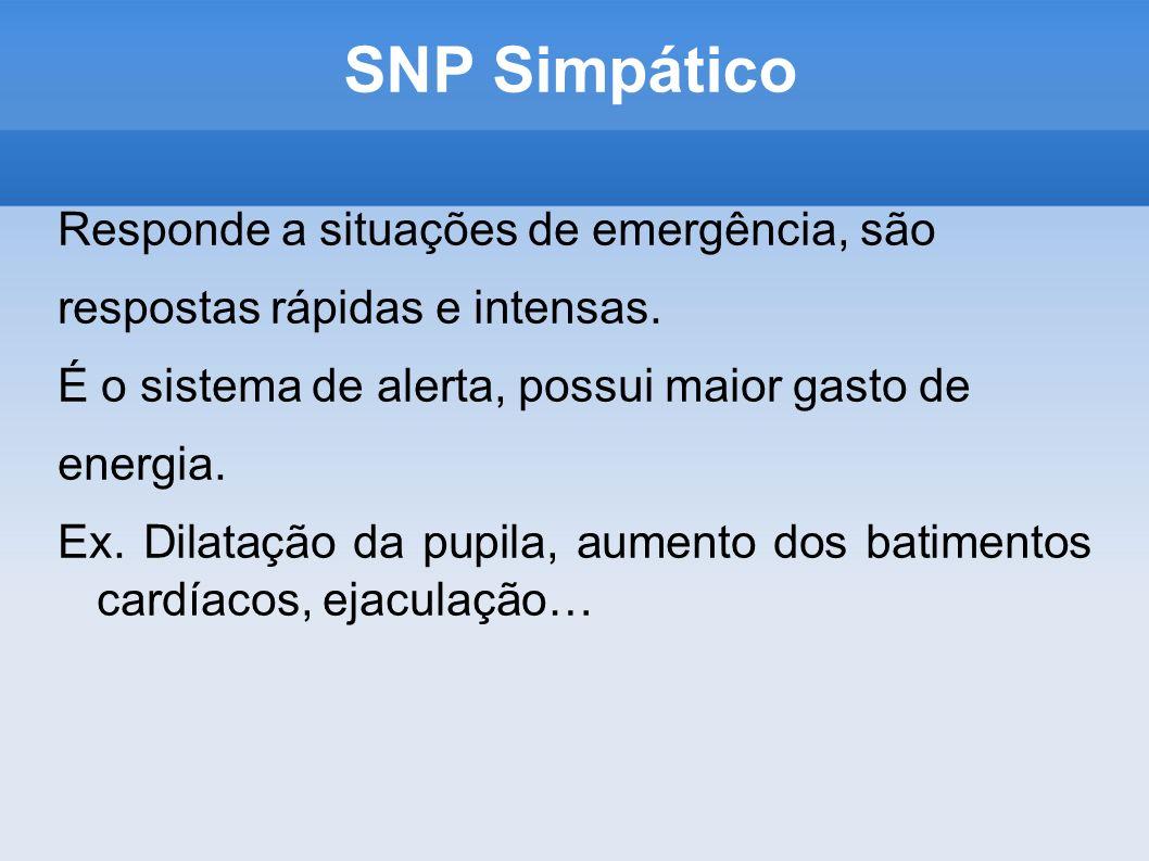 SNP Simpático Responde a situações de emergência, são
