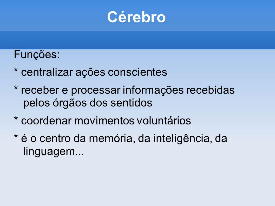 Cérebro Funções: * centralizar ações conscientes