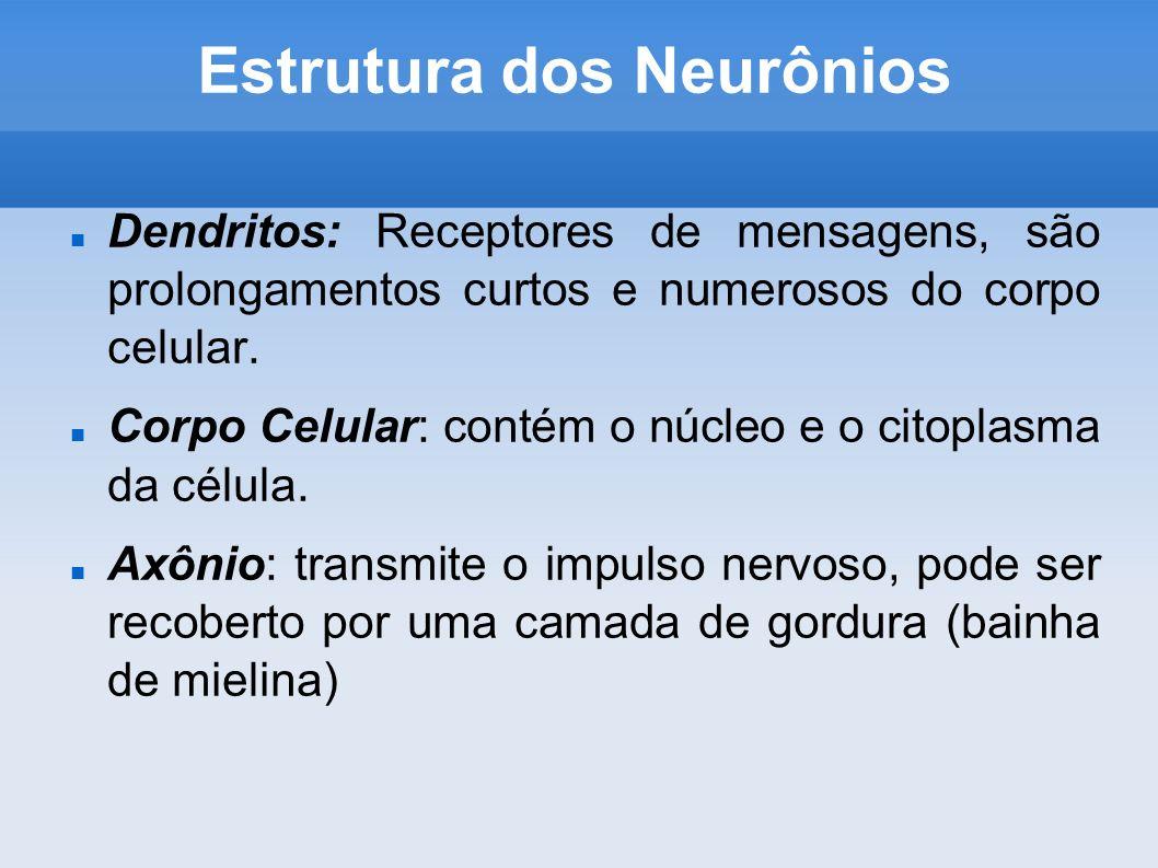 Estrutura dos Neurônios