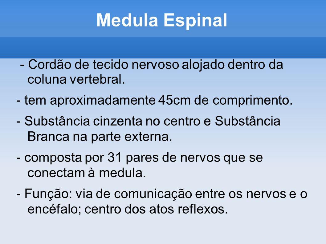Medula Espinal - Cordão de tecido nervoso alojado dentro da coluna vertebral. - tem aproximadamente 45cm de comprimento.