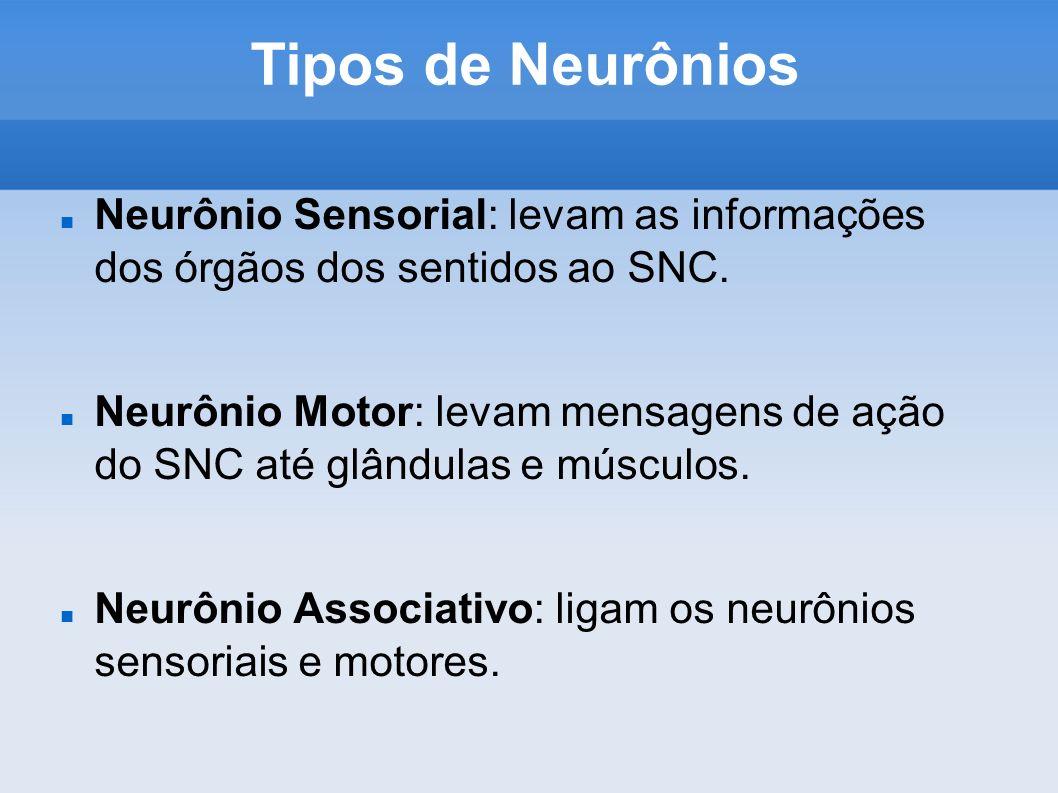 Tipos de Neurônios Neurônio Sensorial: levam as informações dos órgãos dos sentidos ao SNC.