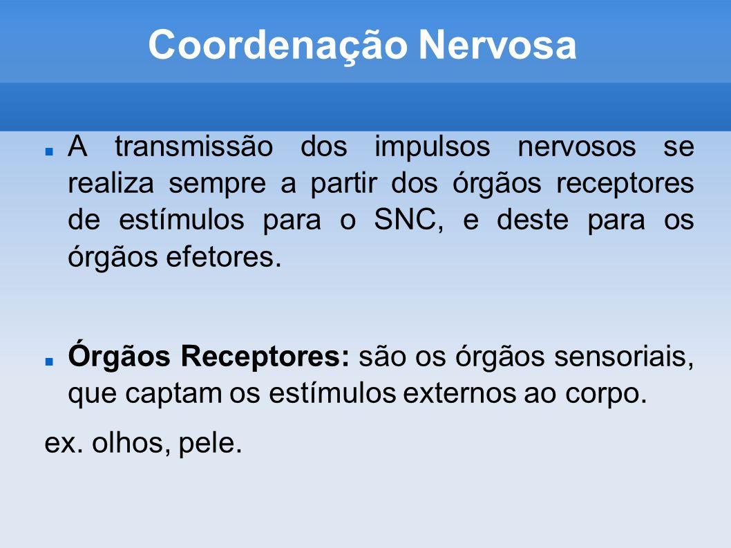 Coordenação Nervosa