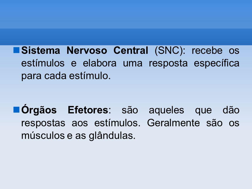Sistema Nervoso Central (SNC): recebe os estímulos e elabora uma resposta específica para cada estímulo.