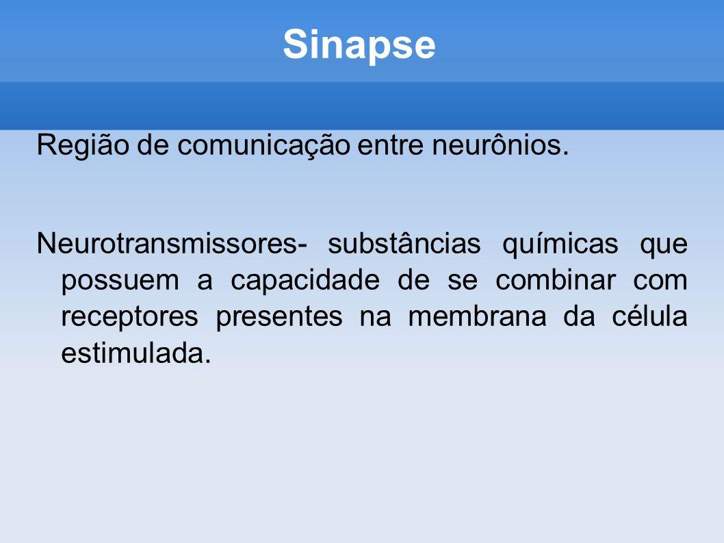 Sinapse Região de comunicação entre neurônios.