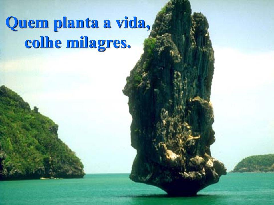 Quem planta a vida, colhe milagres.
