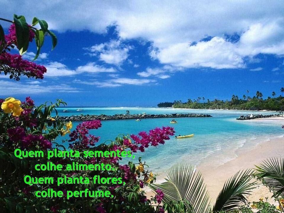 Quem planta sementes, colhe alimento. Quem planta flores, colhe perfume.
