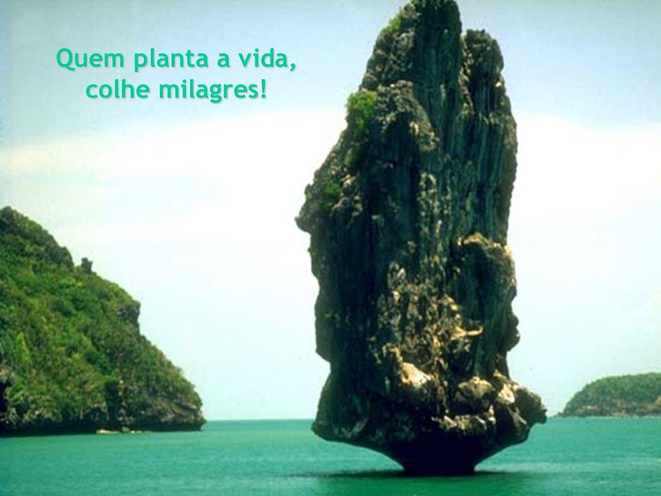 Quem planta a vida, colhe milagres!