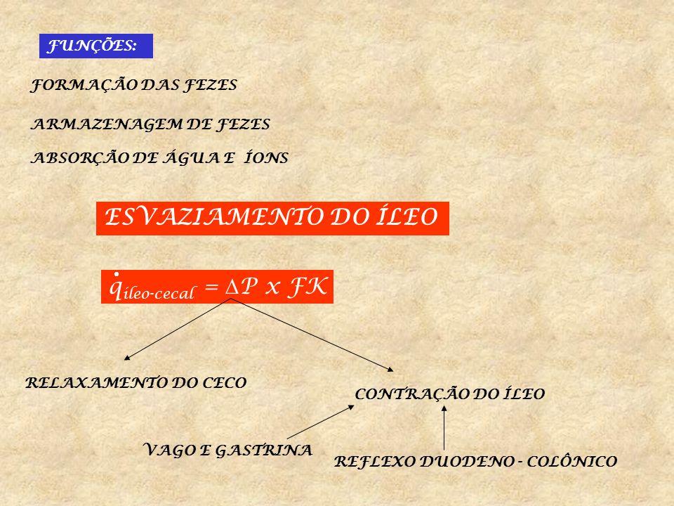 ESVAZIAMENTO DO ÍLEO qileo-cecal = P x FK FUNÇÕES: FORMAÇÃO DAS FEZES