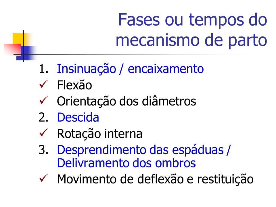 Fases ou tempos do mecanismo de parto